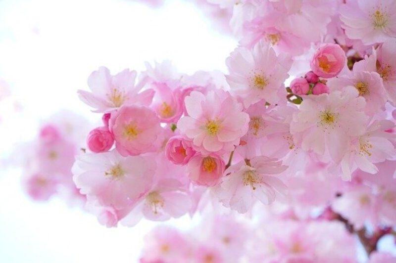 Jak radzić sobie z przesileniem wiosennym?